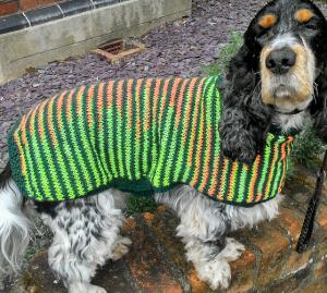 dog coat 1