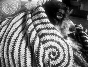 Main image for Vortex dog blanket